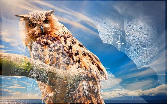 Owls HD live wallpaper screenshot 14