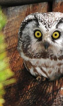 Owls HD live wallpaper screenshot 1