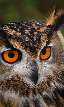 Owls HD live wallpaper screenshot 2