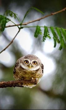 Owls HD live wallpaper screenshot 4