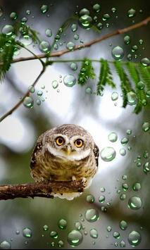 Owls HD live wallpaper screenshot 5