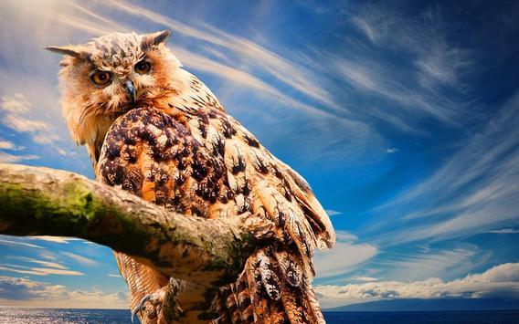 Owls HD live wallpaper apk screenshot