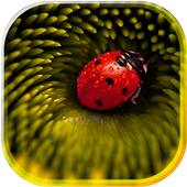 Lady Beetle Nice Live Wallpaper icon