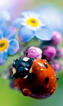 Lady Beetle Nice Live Wallpaper poster