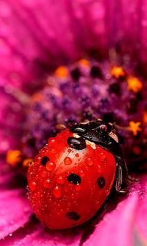 Lady Beetle Nice Live Wallpaper apk screenshot