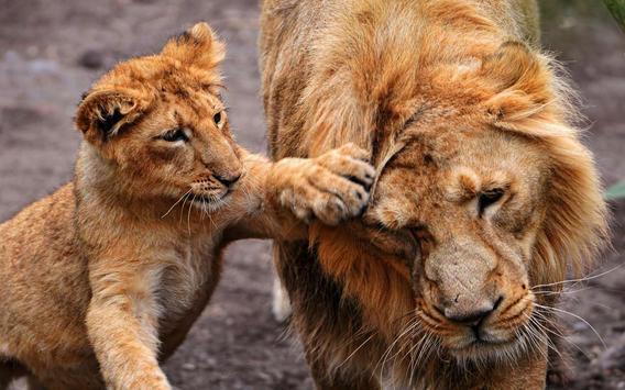Lion Cubs live wallpaper apk screenshot
