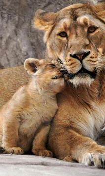 Lion Cubs live wallpaper poster