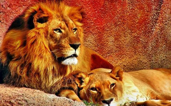 Lions African live wallpaper apk screenshot