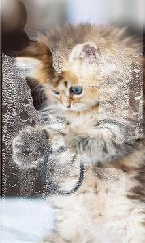 Small Kittiens live wallpaper apk screenshot