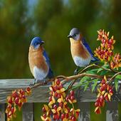 Birds Digital Clock icon