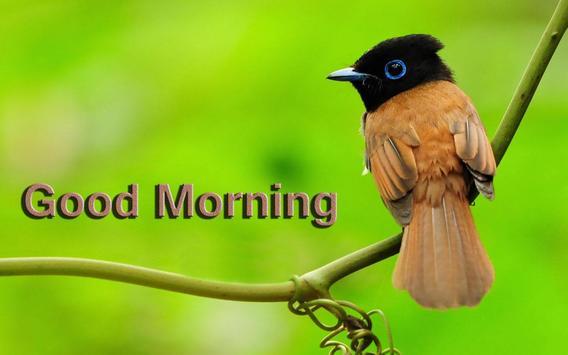 Good morning Gif & cards screenshot 3