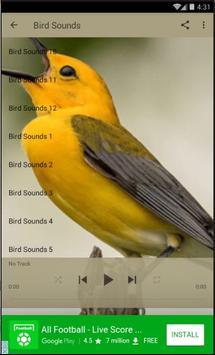 Bird Sounds Best Lite apk screenshot