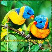 Terapi Burung Masteran Gacor icon