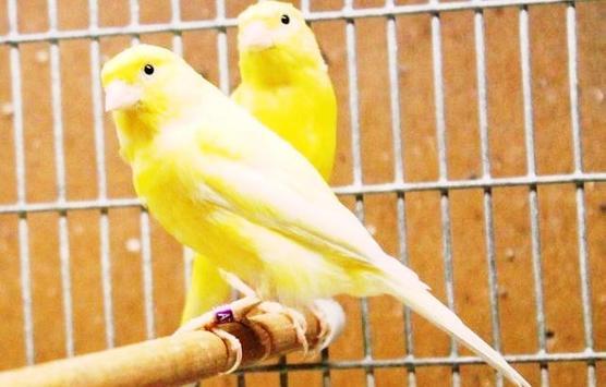 Terapi Burung Masteran Gacor apk screenshot