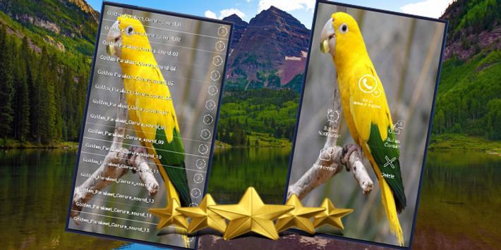 Golden Conure Parrot Sound : Golden Parakeet Sound apk screenshot
