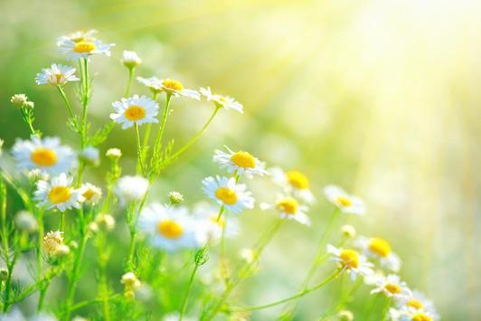 Beautiful Garden Frames screenshot 2