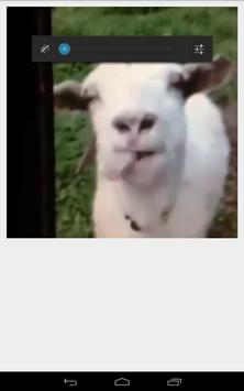 Funny Goat poster