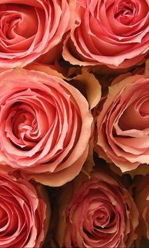 Roses Jigsaw Puzzles apk screenshot