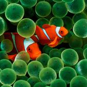 Sea Life Puzzle icon