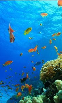 Sea Life Puzzle apk screenshot