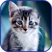Cute Cats HD LWP HD. icon