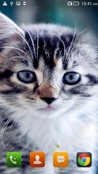 Cute Cats HD LWP HD. poster
