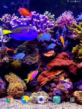 Aquarium Video Live Wallpaper screenshot 11