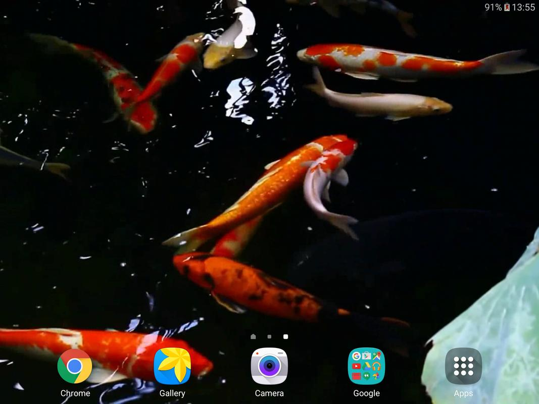 koi video live wallpaper apk download free