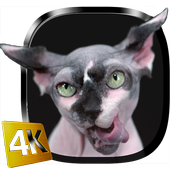Sphynx Cat Live Wallpaper icon