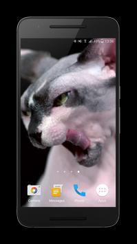 Sphynx Cat Live Wallpaper screenshot 3