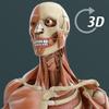 Visual Anatomy 3D | Human アイコン