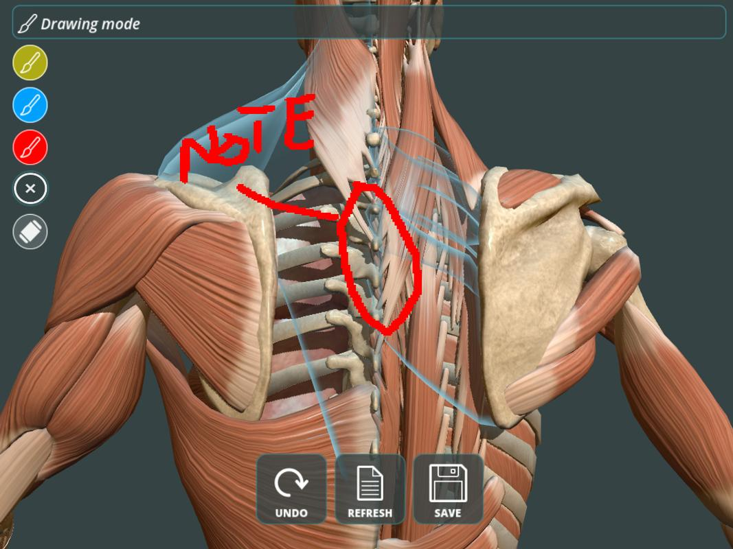 Visual Anatomy 3d Human For Android Apk Download