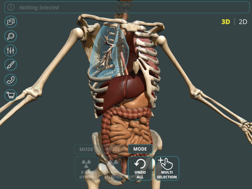 Moderno Anatomía 3d En Línea Libre Festooning - Anatomía de Las ...
