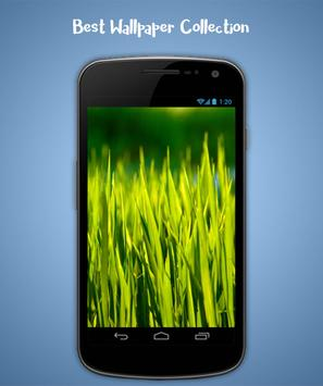 Grass Live Wallpaper screenshot 1