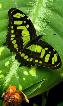 green butterfly wallpaper poster