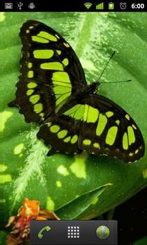 green butterfly wallpaper screenshot 1