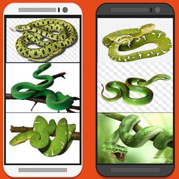 GREEN SNAKE WALLPAPER apk screenshot