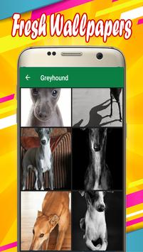 Greyhound Wallpapers poster