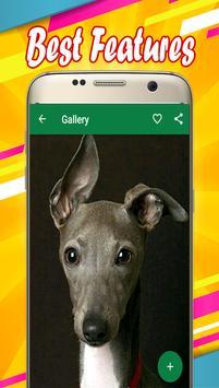 Greyhound Wallpapers apk screenshot