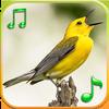 새들의 벨소리 아이콘