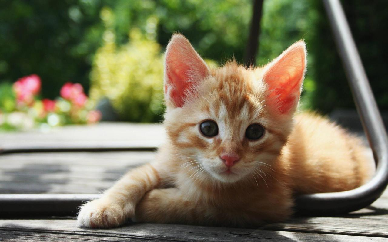 Baby Cat Wallpaper HD Apk Screenshot