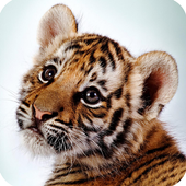Wild Animals Cub Wallpapers icon