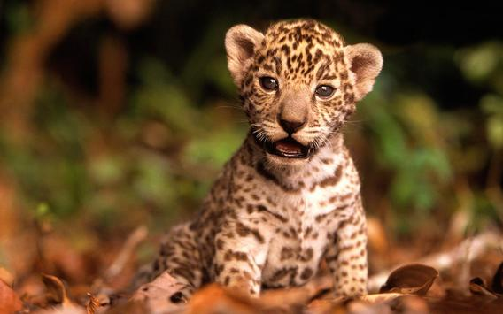 Wild Animals Cub Wallpapers apk screenshot