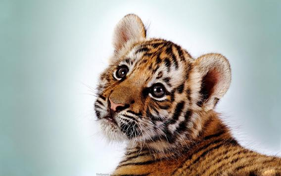 Wild Animals Cub Wallpapers poster