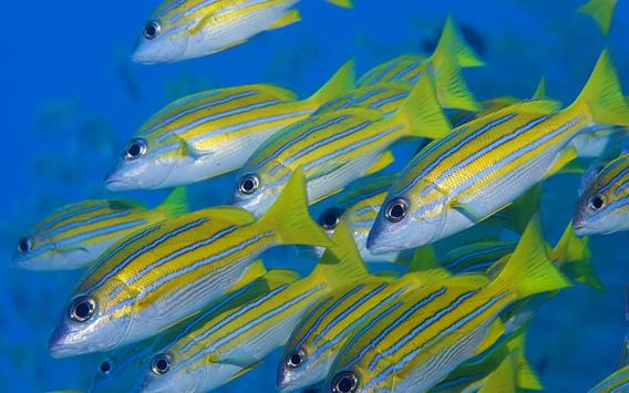 Tropical Fish Wallpaper poster