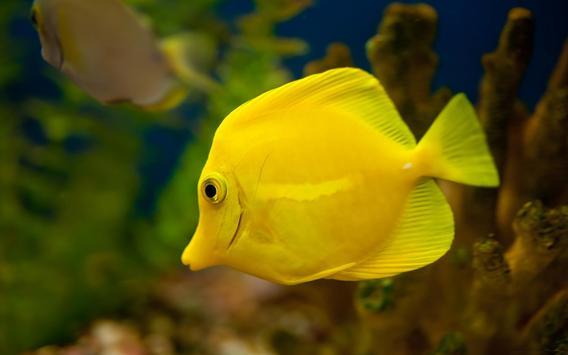 Tropical Fish Wallpaper screenshot 1
