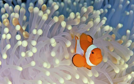 Tropical Fish Wallpaper screenshot 2