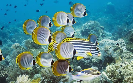 Tropical Fish Wallpaper screenshot 4