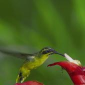 Hummingbird Live Wallpaper icon