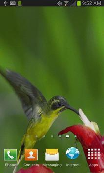 Hummingbird Live Wallpaper poster